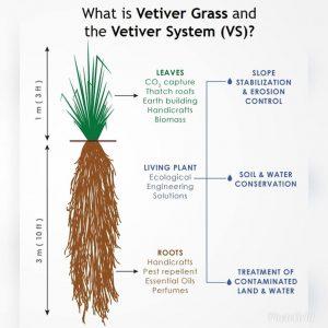 vetiver system